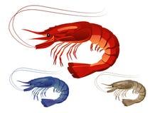 Shrimps on white background Royalty Free Stock Images
