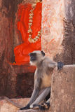 Shrine Monkey Royalty Free Stock Image