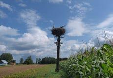 Shrine stork. Stork nest family in Mazury Stock Image