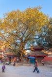 Shrine in a tree - Durbar square, Kathmandu Royalty Free Stock Image