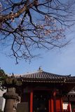 Shrines, temples, public places in Japan And there is a beautiful cherry blossom tree in front stock images