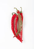 Shrinking and mouldy chili peppers Stock Photos