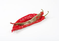Shrinking and mouldy chili peppers Royalty Free Stock Image