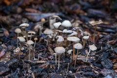 Shrooms в лесе Стоковая Фотография RF