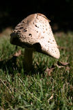 Shrooms stockbilder