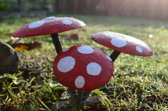 'Shrooms Fotografia Royalty Free