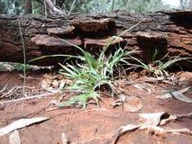 Shrooms dell'albero immagine stock libera da diritti