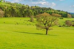 Shropshire landskap, England, UK royaltyfria foton