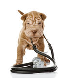 Shrpei puppy dog with a stethoscope on his neck. royalty free stock images