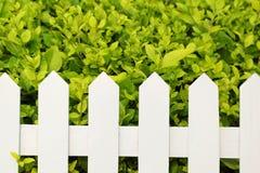 shrub загородки стоковое фото