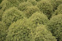 shrub картины стоковое изображение