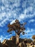 shrub можжевельника стоковые изображения rf