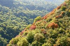 shrub осени стоковое изображение