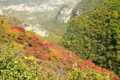 shrub осени стоковые фото