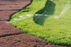 shrub сада стоковые изображения rf