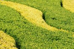 shrub сада стоковое изображение rf
