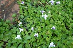 shrub утеса Стоковое Фото