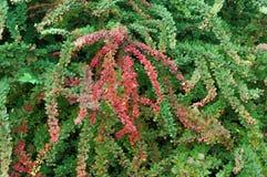 shrub стоковое фото rf