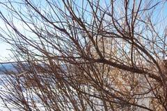 shrub Стоковое Изображение RF