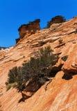 Shrub atop red Sandstone Stock Photo