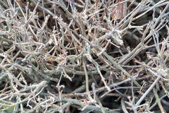 Shrub branches without leaves Stock Photos