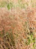 Shrub of brown dead flowers outside in country stock photo