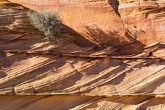 Shrub clings to Rock Layers Royalty Free Stock Photo