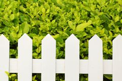 Shrub and fence Stock Photo