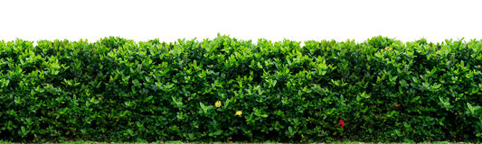 Shrub fence Royalty Free Stock Photography
