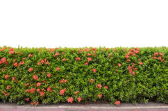Free Shrub Fence Stock Image - 26458171