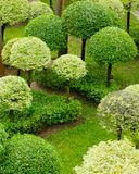 Shrub Garden Stock Photo