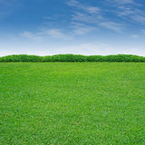 Shrub and grass. Shrub and green grass on blue sky Royalty Free Stock Photos