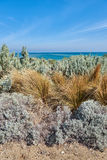 Shrub and grass on the beach Royalty Free Stock Images