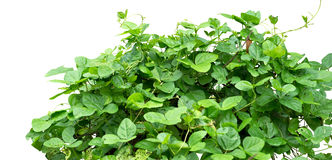 Shrub Stock Photo