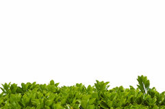 Shrub leaves border background Royalty Free Stock Images