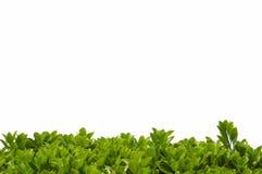 Shrub leaves border background stock illustration