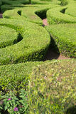 Shrub maze Stock Photography