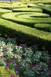Shrub Maze Royalty Free Stock Photo