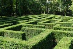 Shrub maze. Large unique green shrub maze stock photo