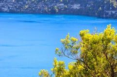 Shrub - Mount Gambier. Shrub on the rim of the Blue Lake - Mount Gambier, SA, Australia Stock Photography