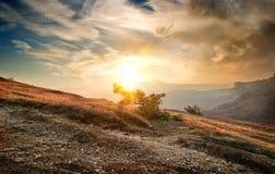 Shrub on the mountain Stock Photography