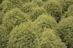 Shrub pattern Stock Image