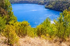 Shrub - Mount Gambier. Shrub on the rim of the Blue Lake - Mount Gambier, SA, Australia Royalty Free Stock Images