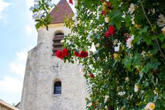Shrub roses blooming against the background of the chapel. Blurred background of the Gothic church for red roses royalty free stock photo