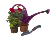 Shrub roses and garden tools Stock Photography