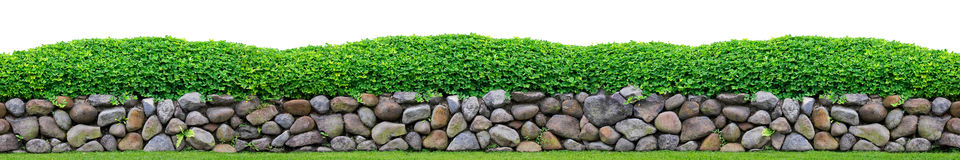 Shrub on stones. And white background Stock Images