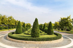Shrub trimming ornamental in public green park royalty free stock photography
