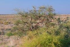 Shrub Vegetation in Prairie Stock Image