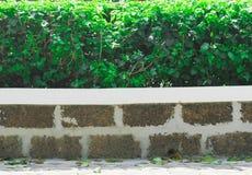 shrubbery Στοκ εικόνες με δικαίωμα ελεύθερης χρήσης