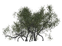 shrubbery Stock Afbeelding